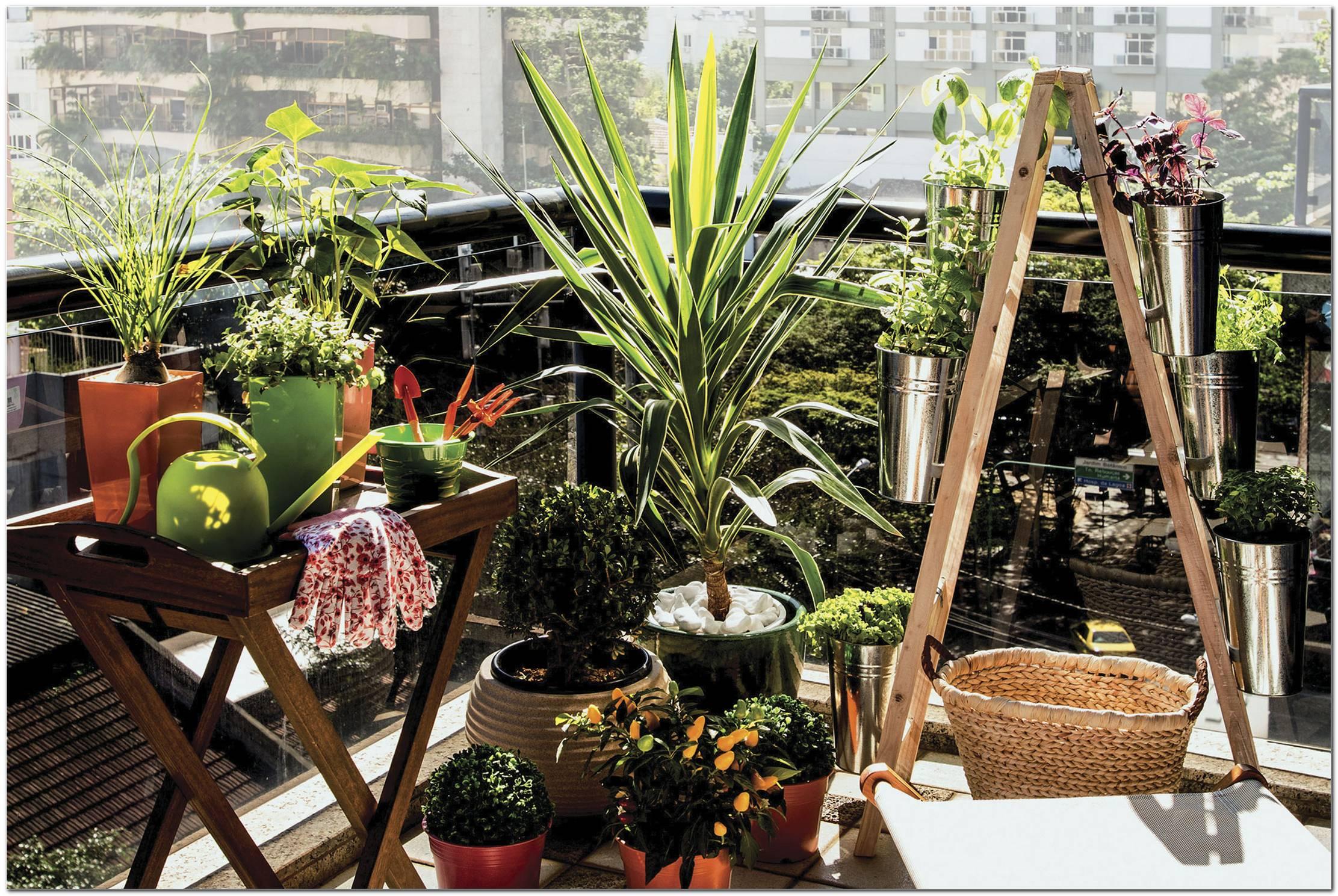 Plantas Para Apartamento As 5 Mais Indicadas Dicas & Como Cultivar