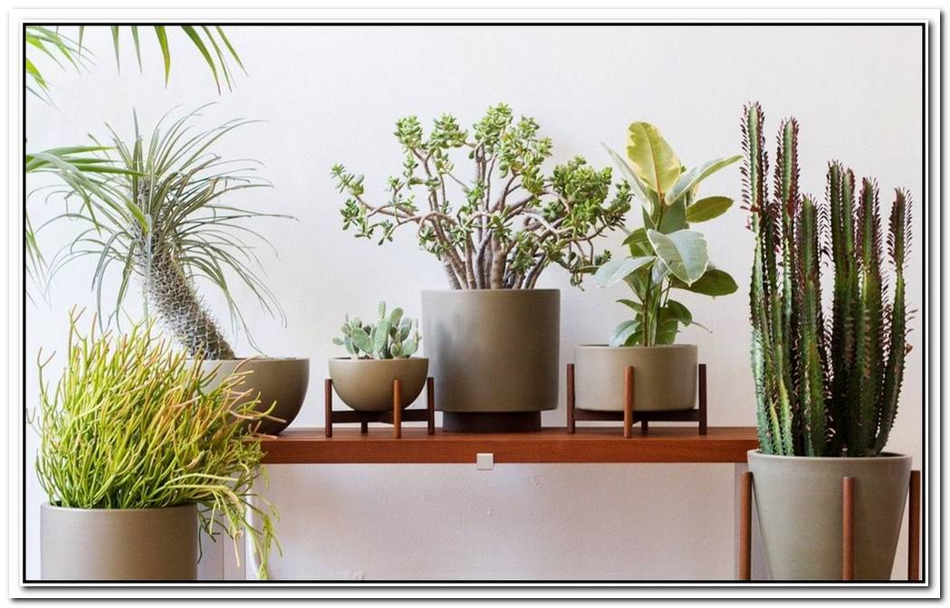 Product Of The Week Beautiful Plant Stands From Modernica