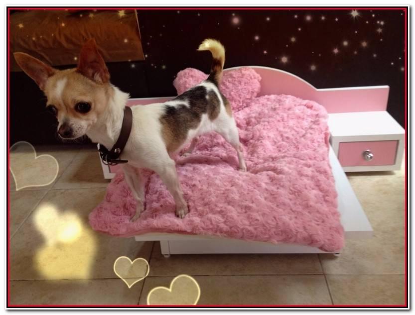 Reciente Camas Para Chihuahuas Colección De Cama Ideas