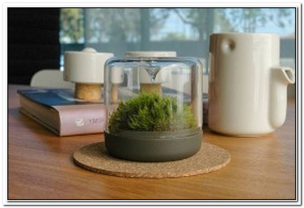SanctuaryLittle Mossarium Brings A Slice Of Natural Haven Indoors