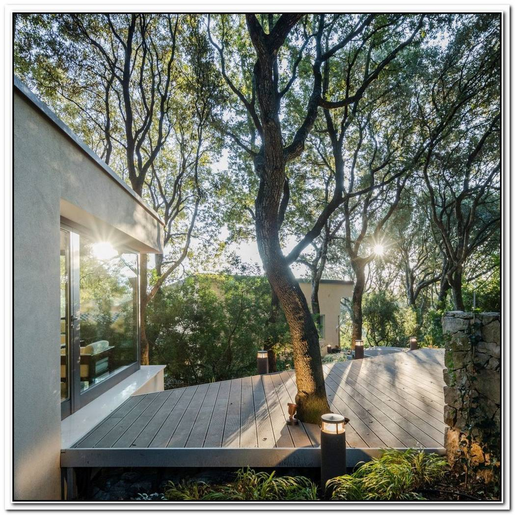Stylish Extension Featuring Three Reused Trees From The Property