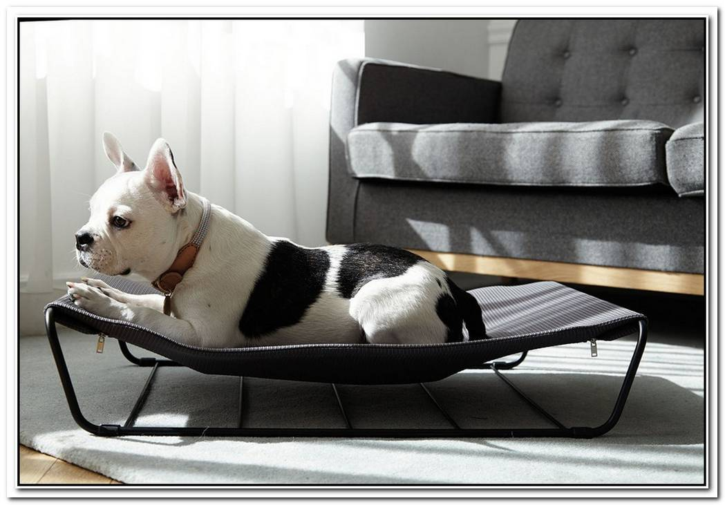 Stylish Furniture And Accessories For Modern Dogs