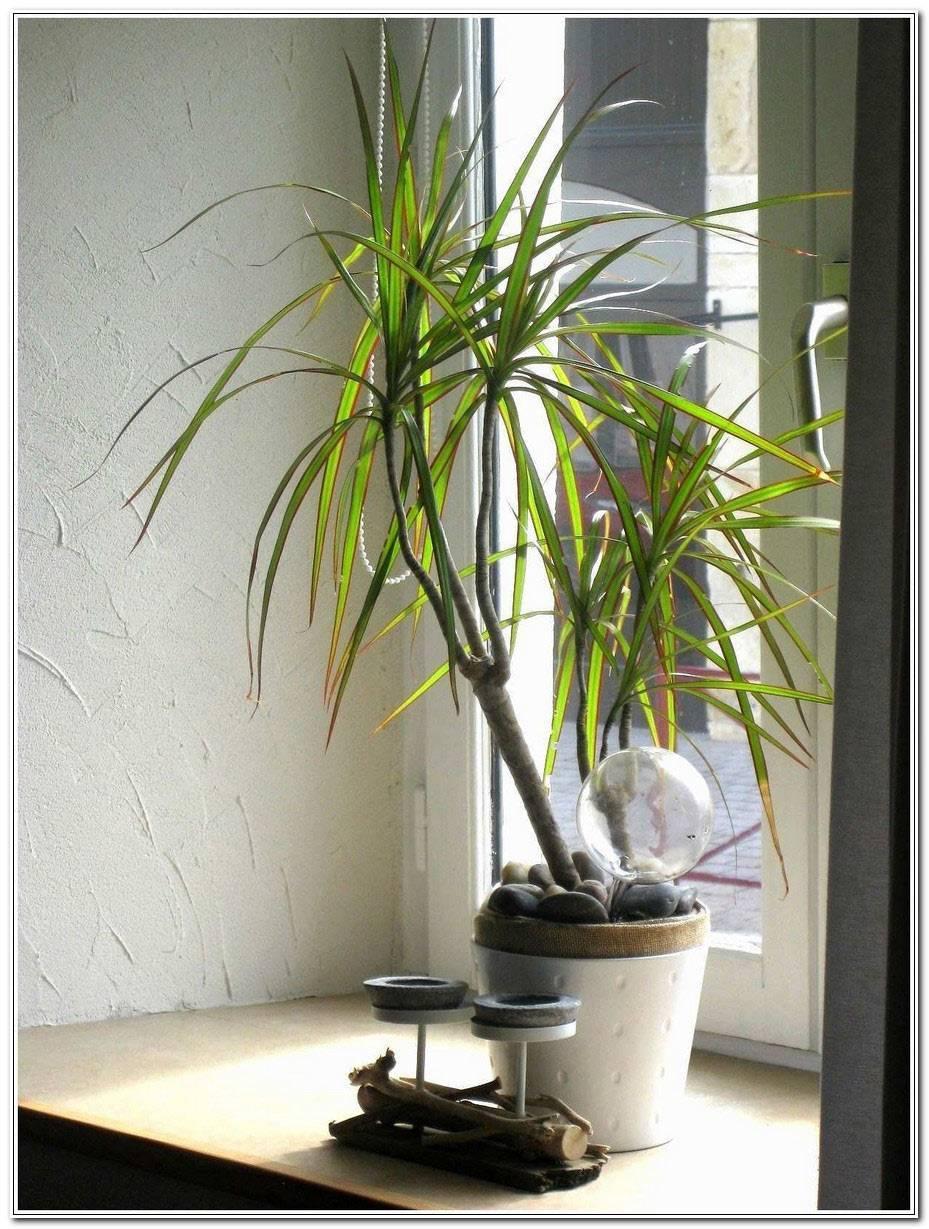 Support Pour Plante Dintrieur