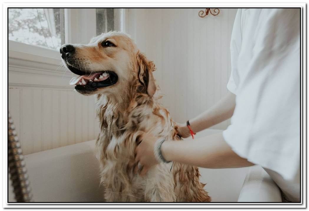 The Complete Guide To Cleaning A Pet Friendly Home