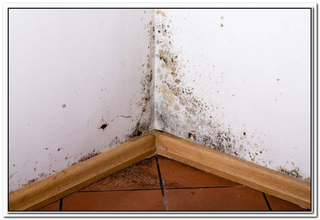 Toxic Mold Faq
