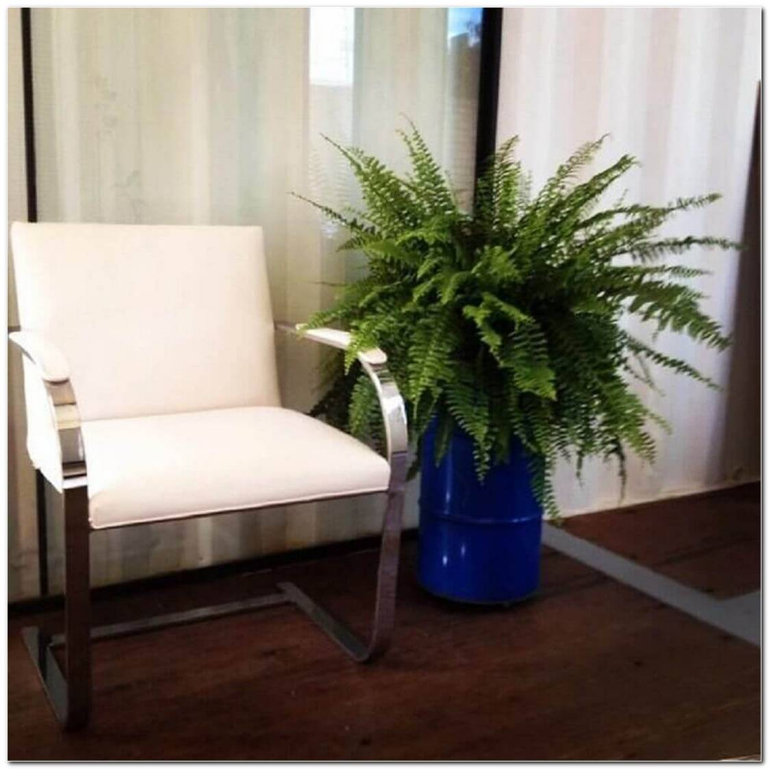 Vaso Com Planta Para Sala