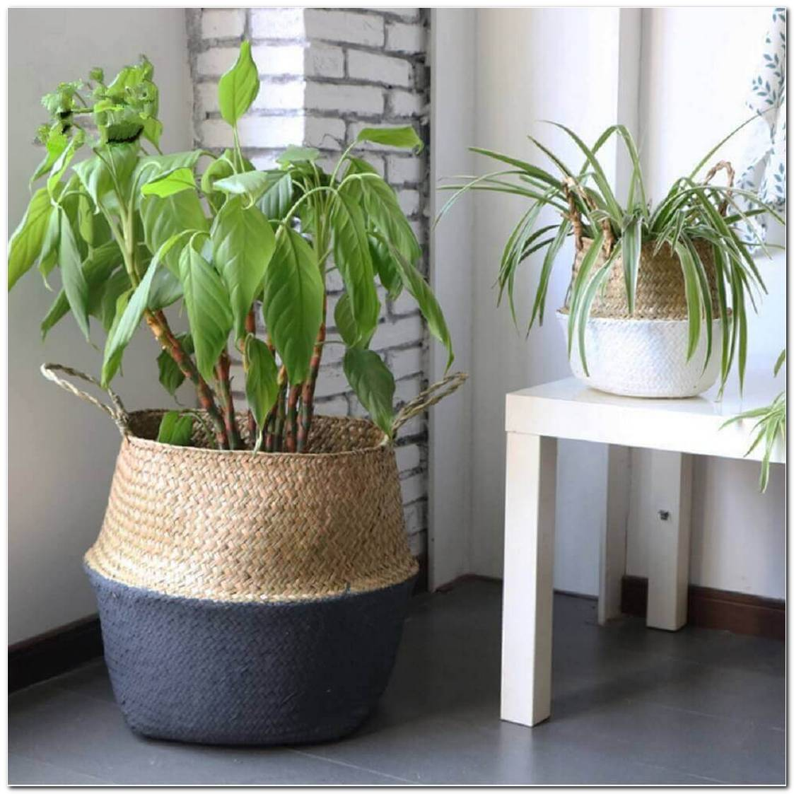 Vasos De Plantas Saiba Como Escolher O Tipo Ideal