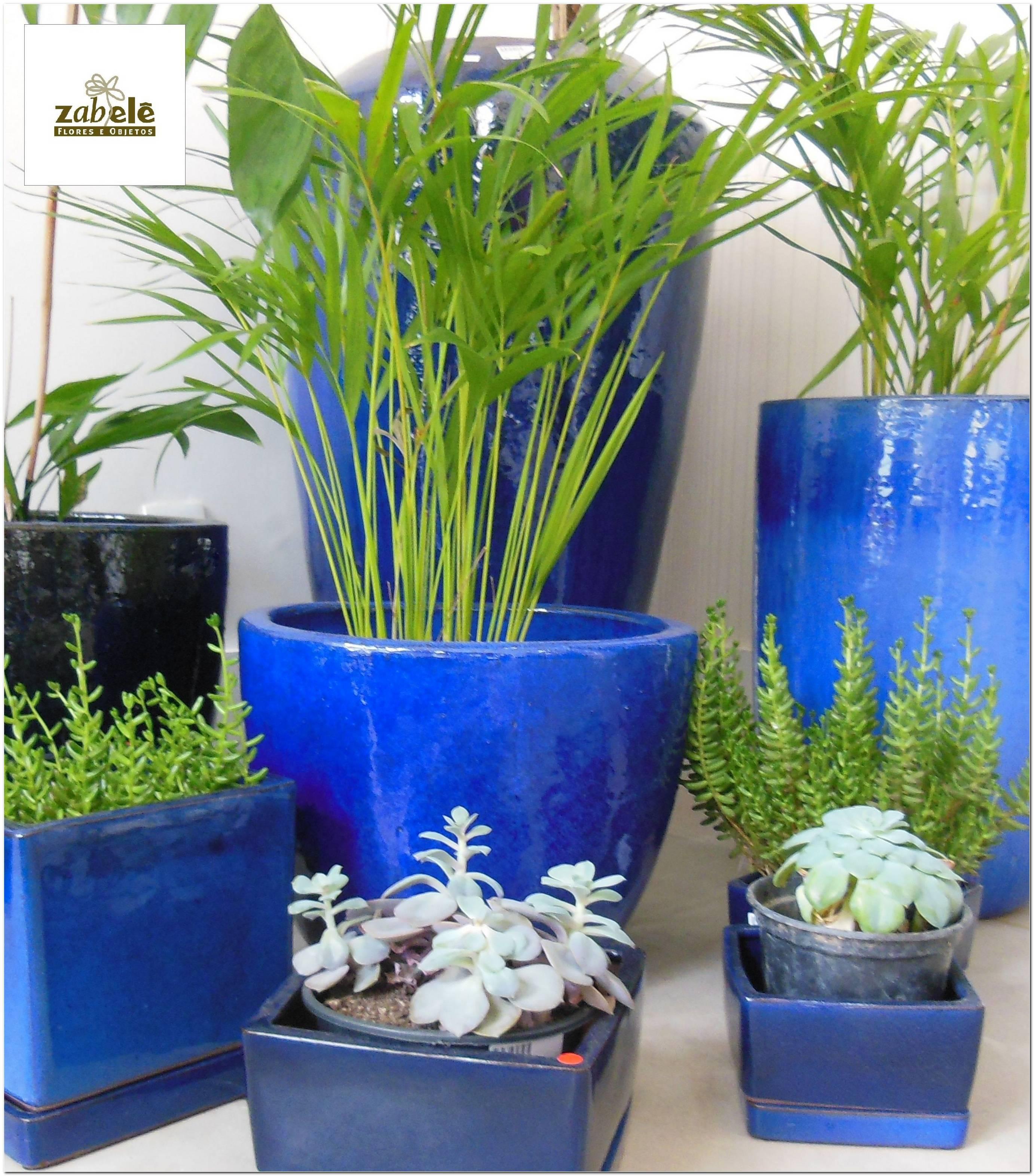 Vasos Vietnamitas Com Plantas