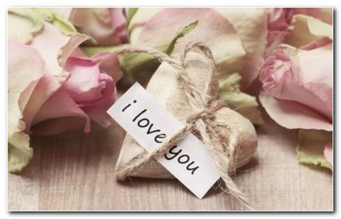 A Heart Of Stone And Page With I Love You Written On It Tied By The Ropes With Each Other.