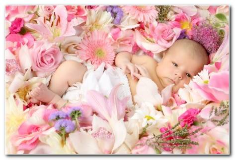 A Cute Baby On Flowers