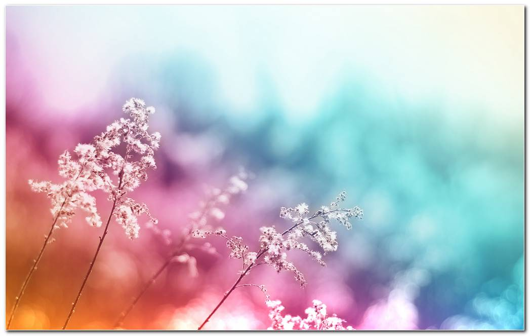 Abstract Flowers Background Wallpapers