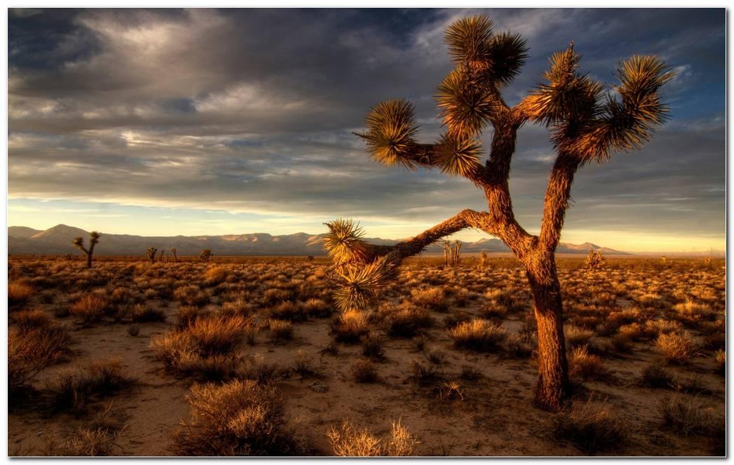 Amazing Desert Nature Wallpaper Background Hd Wide
