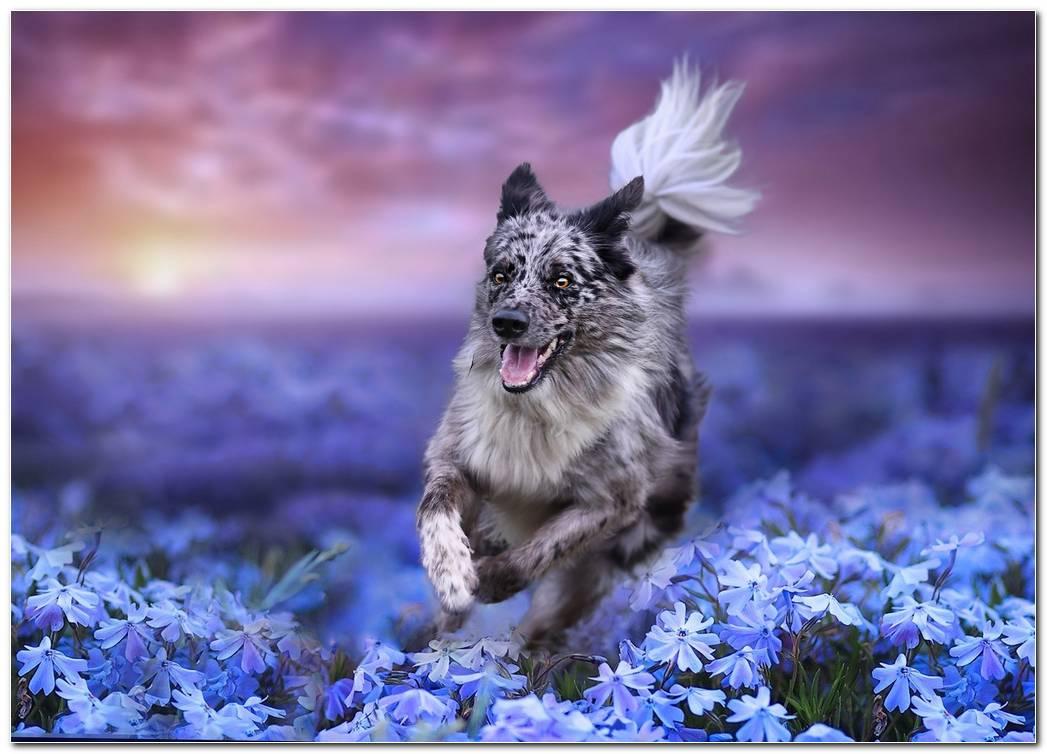 Amazing Dog Wallpaper Hd
