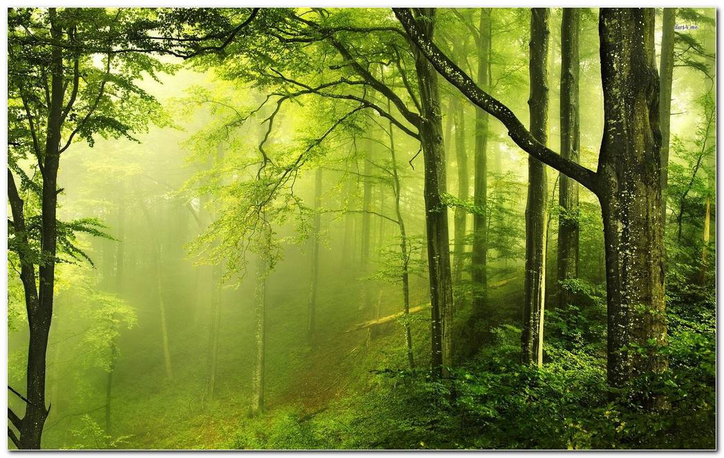 Amazing Green Forest Nature Wallpaper Background