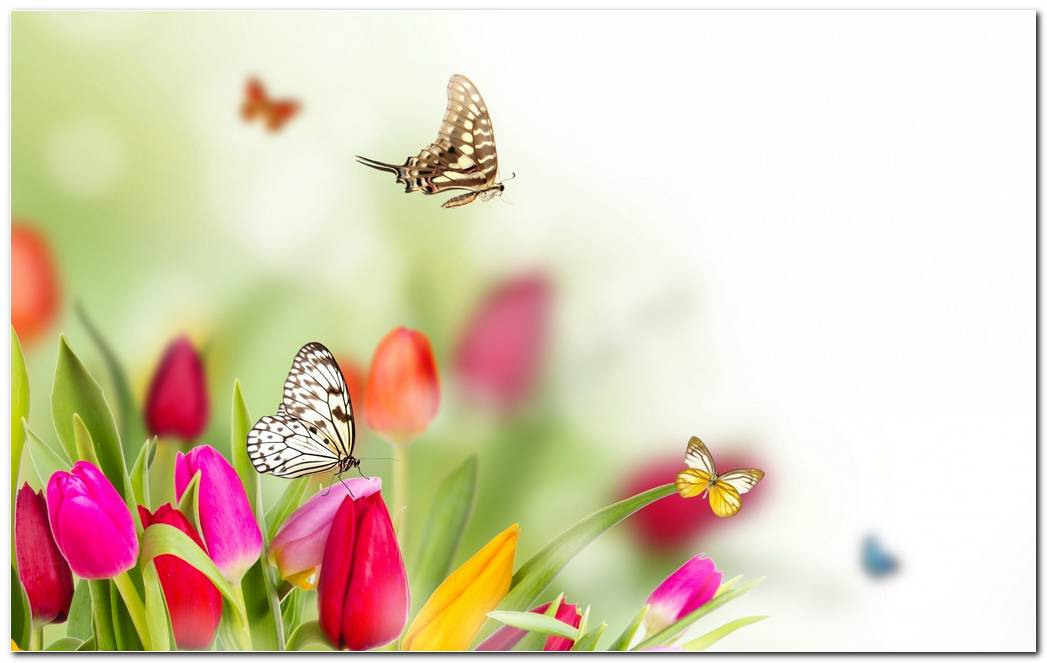 Amazing Nature Spring Wallpaper Background Image