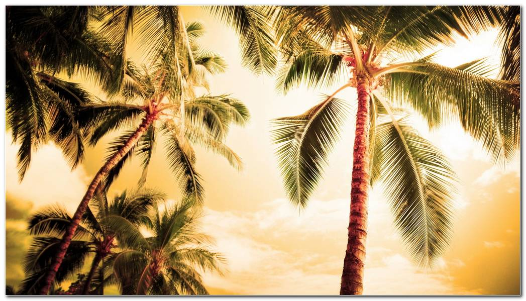 Amazing Palm Tree Wallpaper Background Image