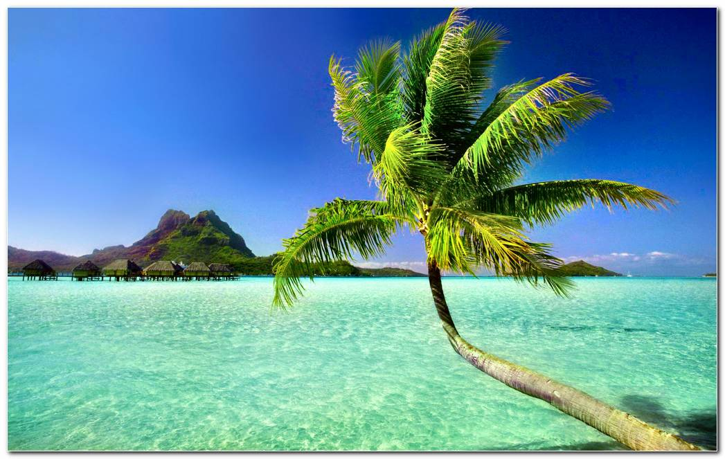 Amazing Palm Tree Wallpaper Background Picture