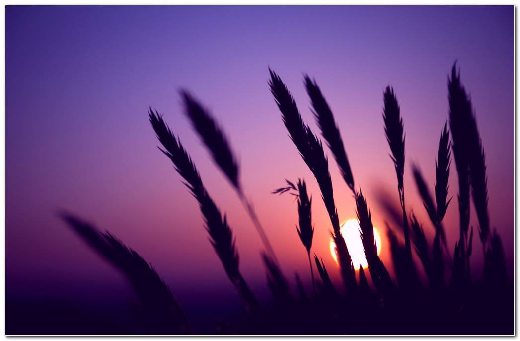 Amazing Purple Sunset Nature Wallpaper Background