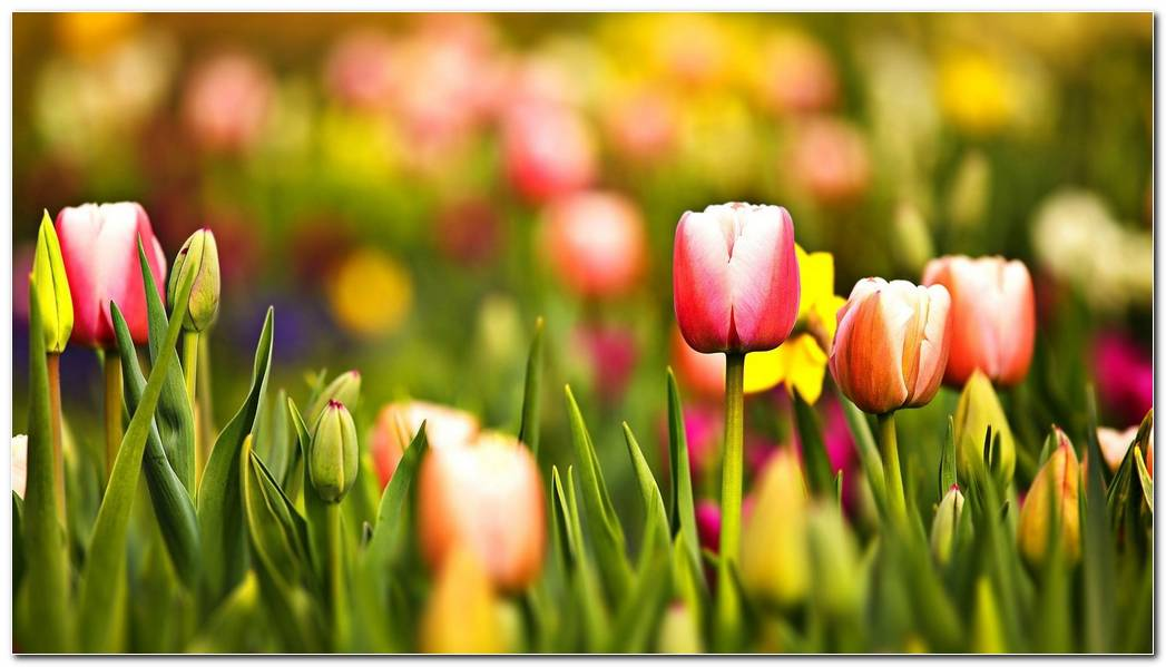 Amazing Spring Wallpaper Background Image