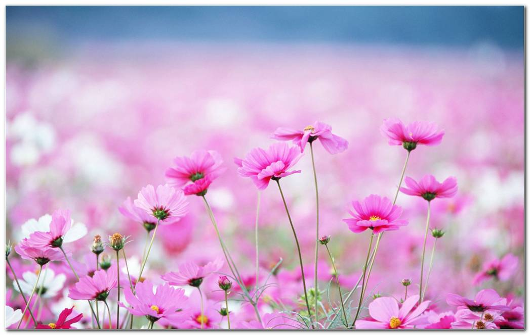 Amazing Wildflower Wallpapers Background Image