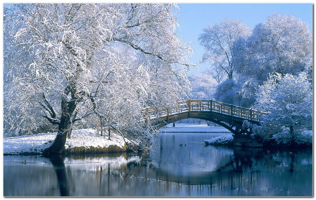 Amazing Winter Snow Nature Wallpaper Background