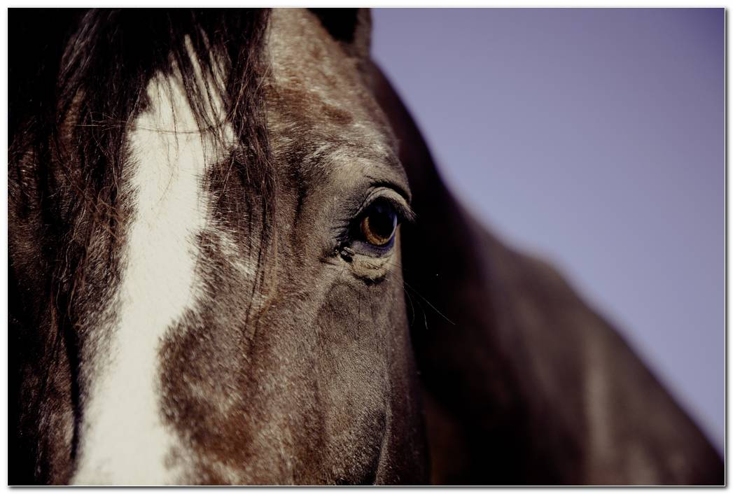 Animal Horse Wallpaper Eyes Background