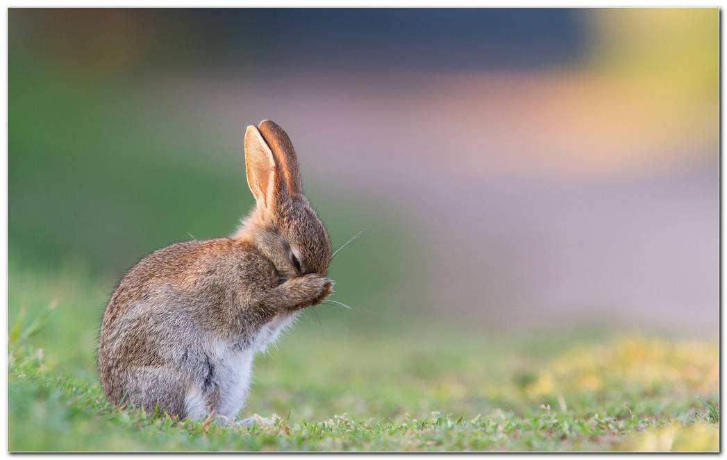 Animal Wallpaper Background Rabbit Wallpaper  Grass Background  Sadness