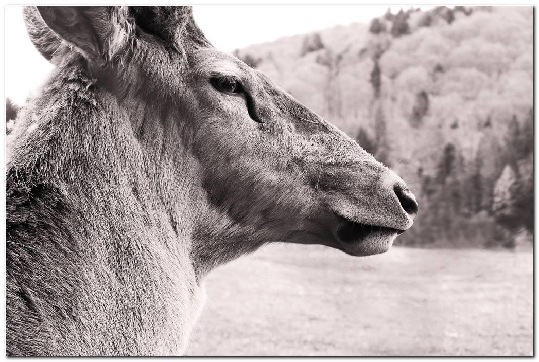Animal Wallpaper Desktop Free