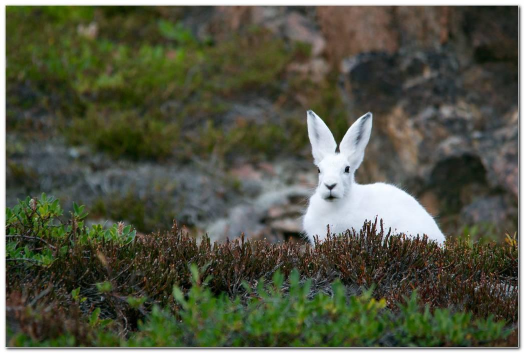 Animal Wallpaper Desktop Image