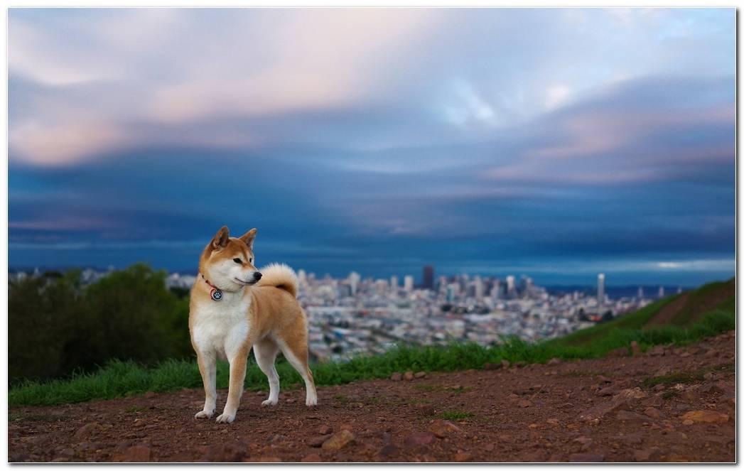 Animal Wallpaper Dog Background