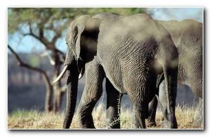 Animals Wallpapers 33