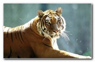 Animals Wallpapers 51