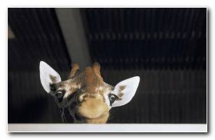 Animals Wallpapers 84