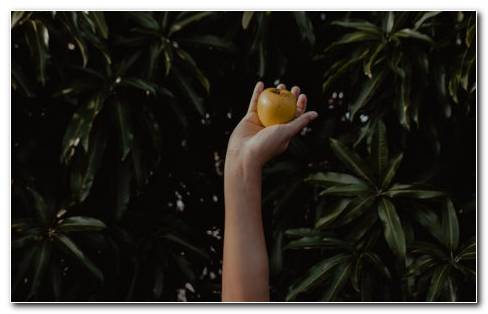 Apple In Hand HD Wallpaper