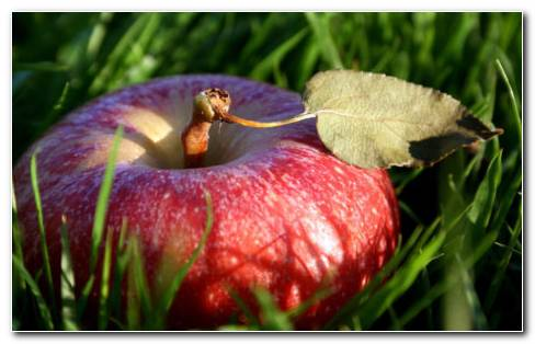 Apple In The Grass HD Wallpaper