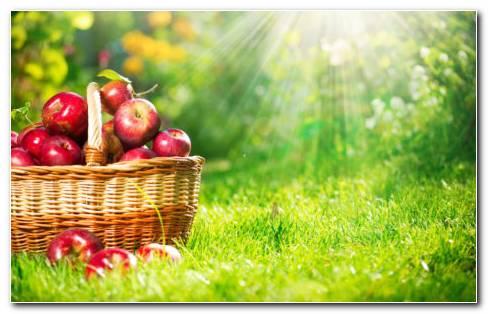 Apples Basket In Grass HD Wallpaper