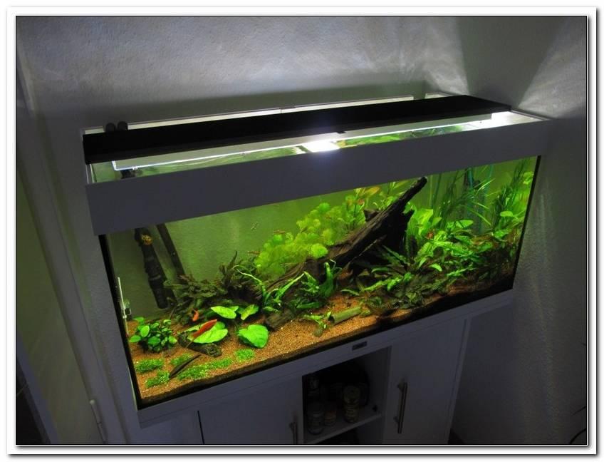 Aquarium Beleuchtung 100 Cm