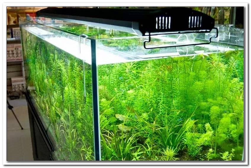 Aquarium Beleuchtung 60 Cm