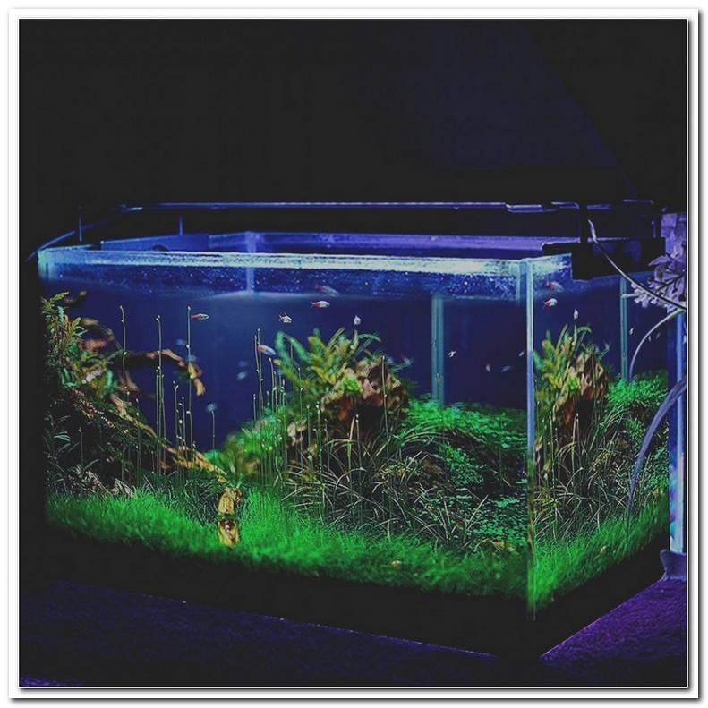 Aquarium Beleuchtung Wie Lange