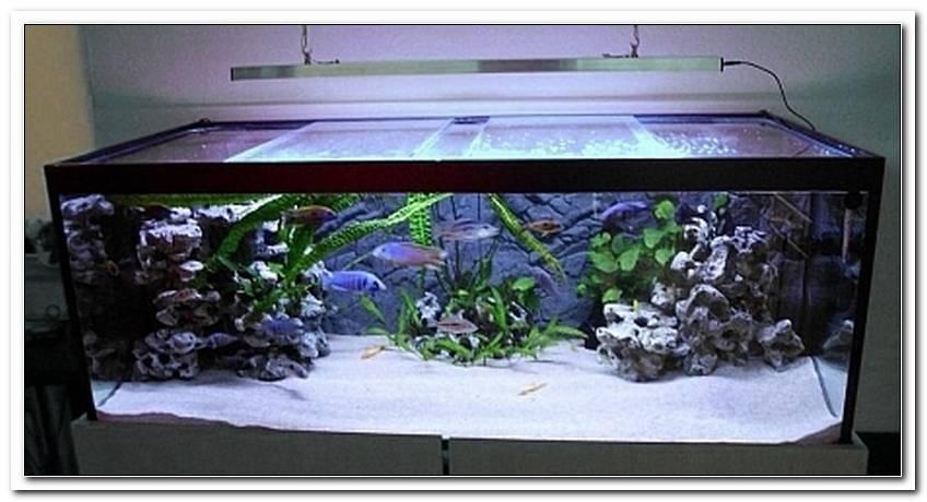 Aquarium Led Beleuchtung Erfahrung
