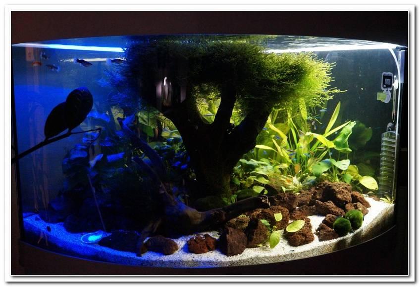 Aquarium Led Beleuchtung Juwel Trigon 190