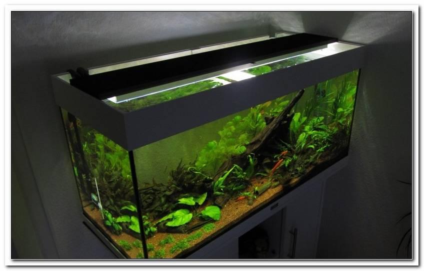 Aquarium Led Beleuchtung Selber Bauen 2013