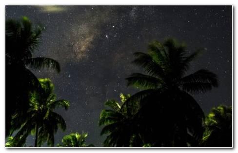 Arecaceae HD wallpaper