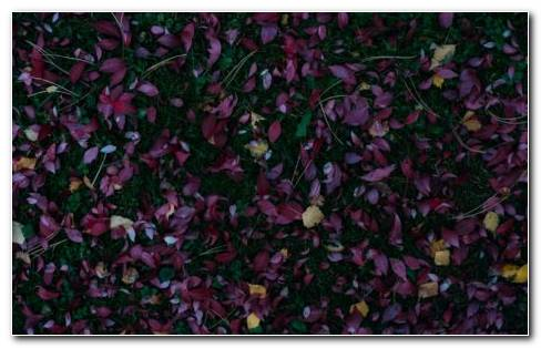 Australian Garden HD Wallpaper