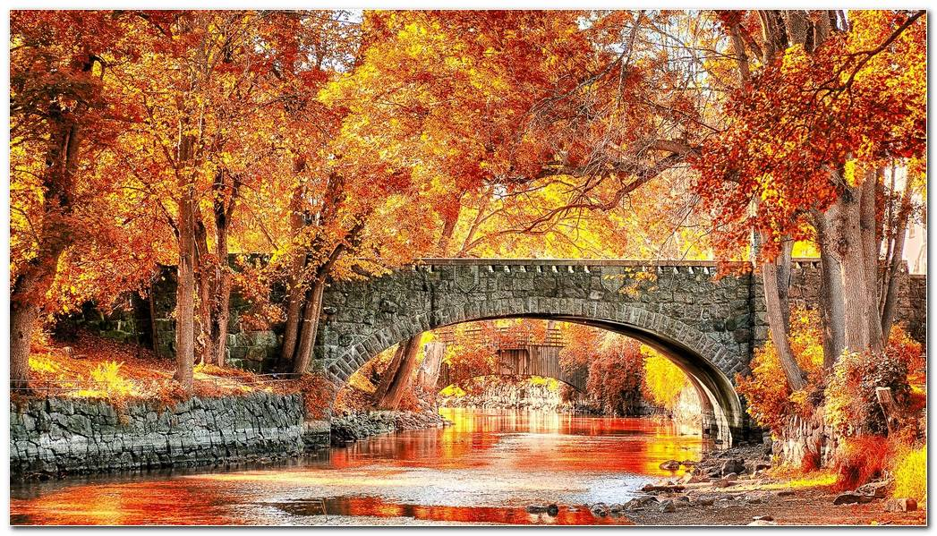 Autumn Bridge Beautiful Grass Sweden River Fall Trees Photo
