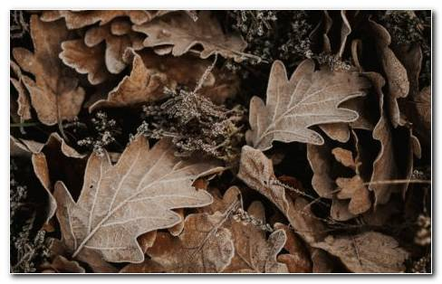 Autumn Fallen Oak Leaves