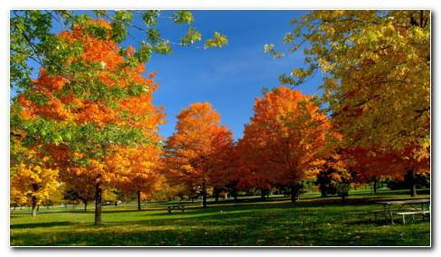 Autumn Green & Orange Trees HD Wallpaper