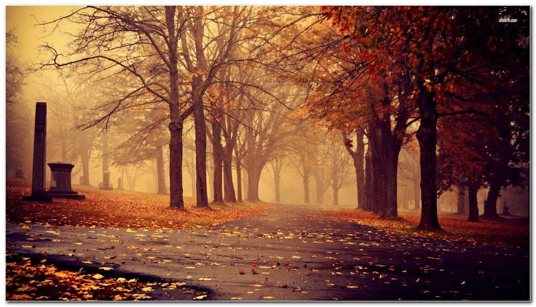 Autumn In The Park Nature Wallpaper Background