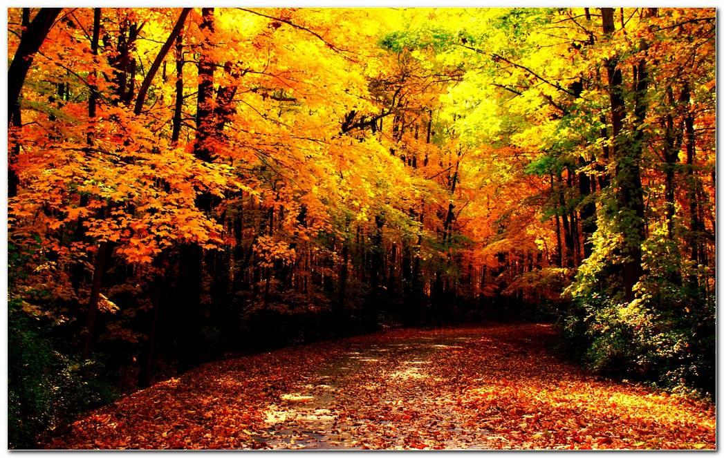 Autumn Season Cool Nature Wallpaper Background