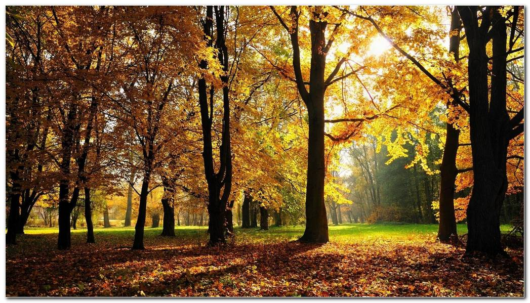 Autumn Season Nature Best Wallpaper Background